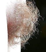 blonde strawberry tuft